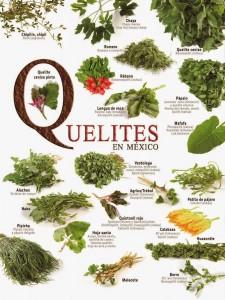 Quelites-en-Mexico